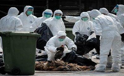إنفلونزا الطيور تضرب من جديد أوربا