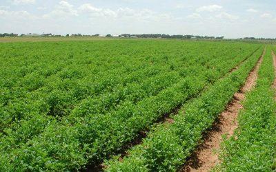 رشيد دحان: مساحة الأراضي الصالحة للزراعة ستنخفض بنسبة 25 في المئة في عام 2050