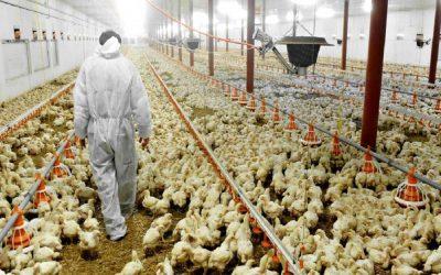 خبراء أوروبيون بالمغرب لإجراء إفتحاص للحوم ودواجن المغرب