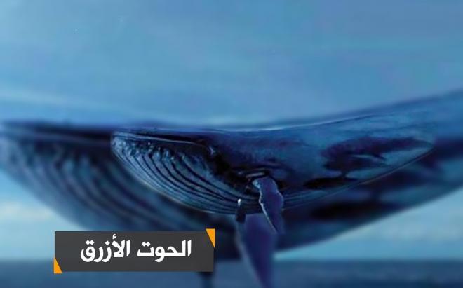 """مديرية الأمن توضح حقيقة انتحار طفل بسبب لعبة """"الحوت الأزرق"""""""