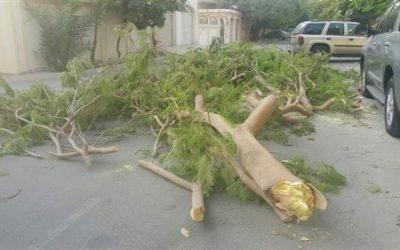 شجرة تسقط على المصلين بسلا الجديدة وهذا عدد الضحايا
