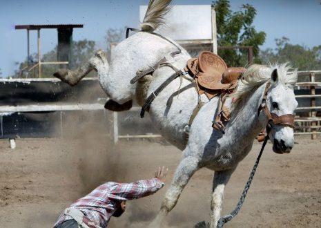 خطير..حصان هائج يدهس المواطنين بموسم التبوريدة بالفقيه بن صالح