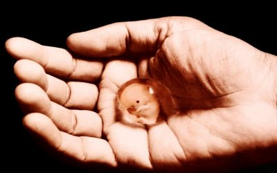 في استفتاء تاريخي..إيرلندا تؤيد الإجهاض