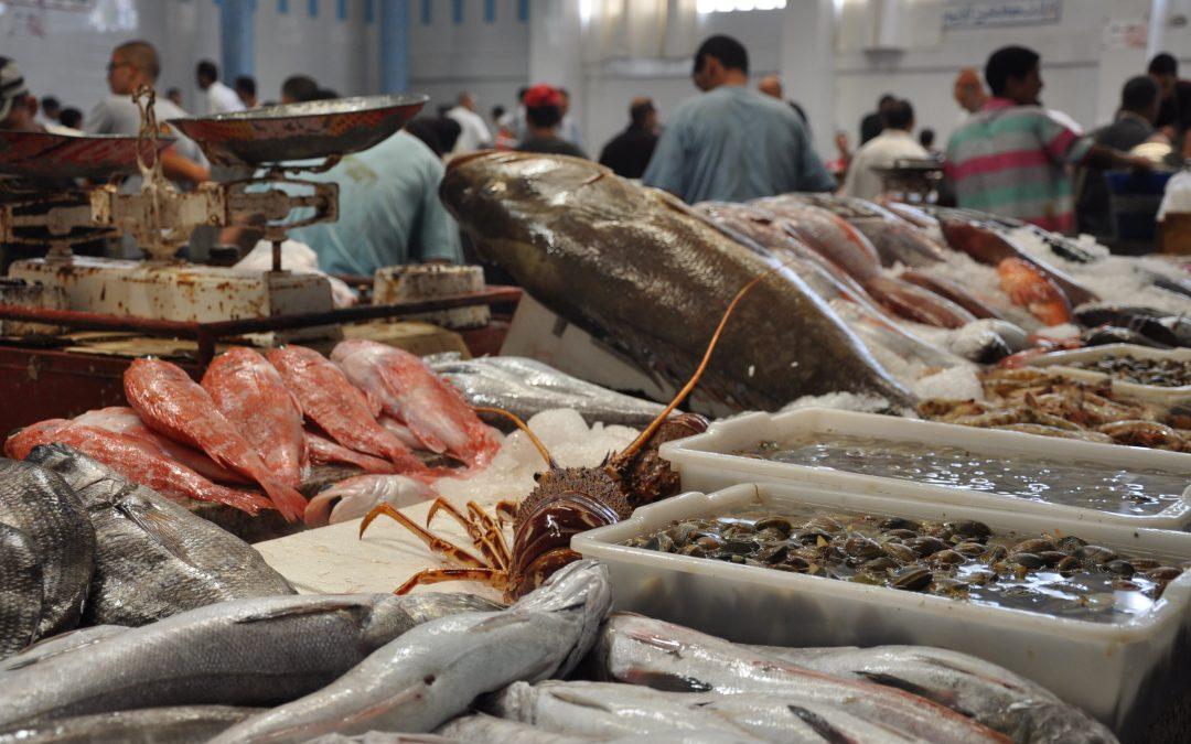 الخراطي: أثمنة الأسماك ستعرف إرتفاعا أياما قبل شهر رمضان