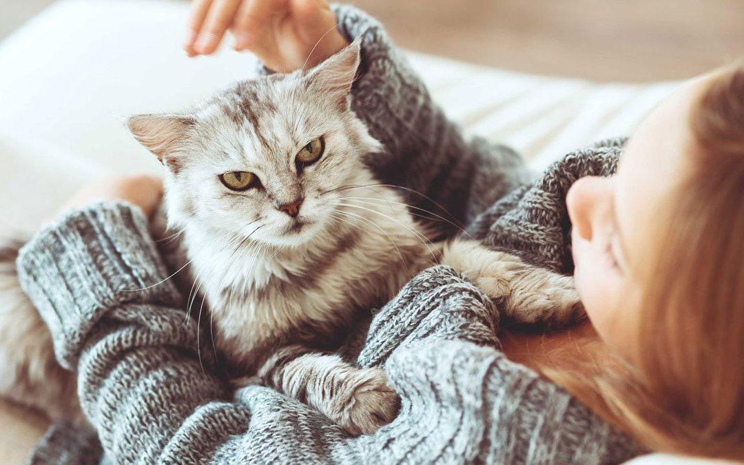 تطوير أول لقاح للحساسية تجاه القطط