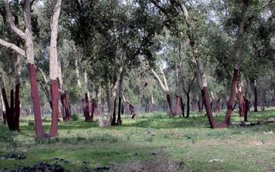 المندوبية السامية للمياه والغابات ومحاربة التصحر تؤكد مواصلة التزامها بالمحافظة على الإرث الغابوي
