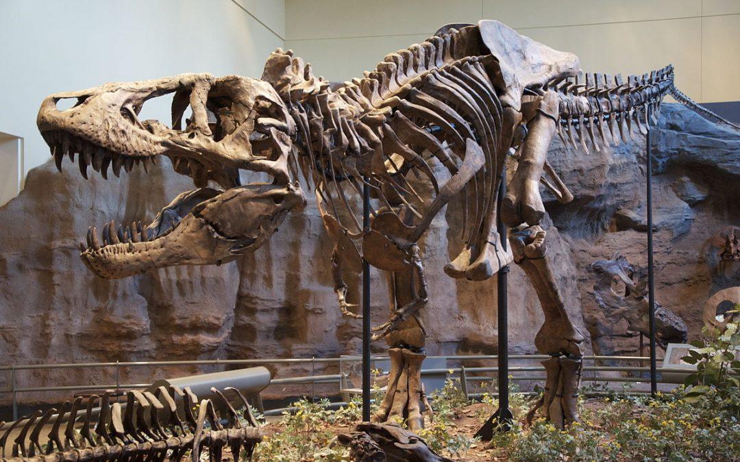 """إكتشاف حفريات سلالة جديدة من الديناصورات يرجع تاريخها إلى """"ما قبل 180 مليون سنة """""""