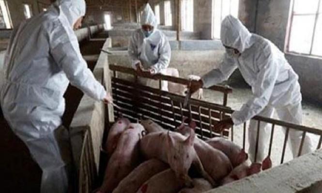 إنفلونزا الخنازير تعود للظهور من جديد