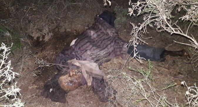 صـــادم..العثور على جثة رجل مبتورة القدم ومرمية بمقبرة بتمارة