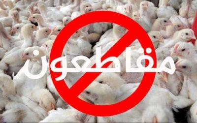 بعد حملة المقاطعة..مربو الدواجن يكشفون سبب إرتفاع أثمنة الدجاج بأسواق المملكة