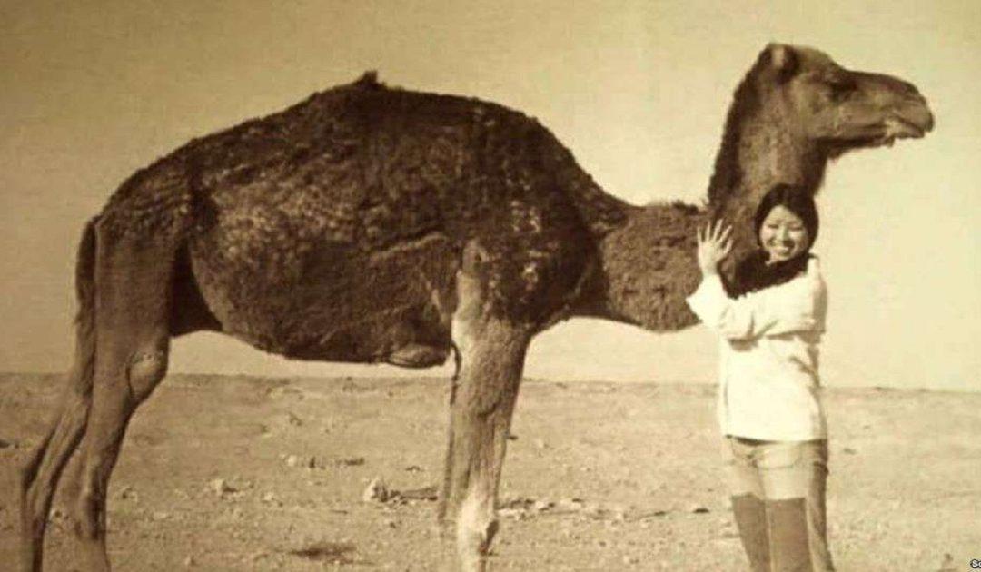 الكاتبة الصينية العالمية سان ماو عشقت الصحراء وغادرت العيون مكرهة