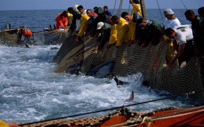 بعد الإتفاق الفلاحي البرلمان الأوربي يصوت بأغلبية ساحقة على إتفاق الصيد البحري