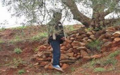 عشريني يقدم على الانتحار في ظروف غامضة بالمحمدية