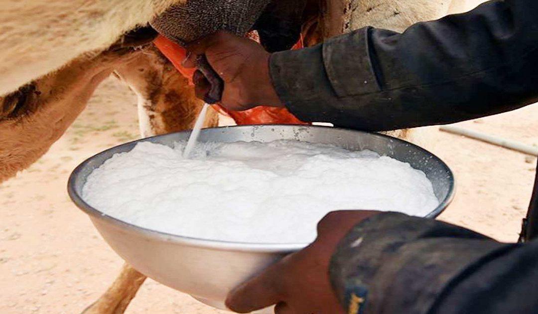 لونسا تطلق تحذيرا بالاقاليم الصحراوية حول الحليب الطازج