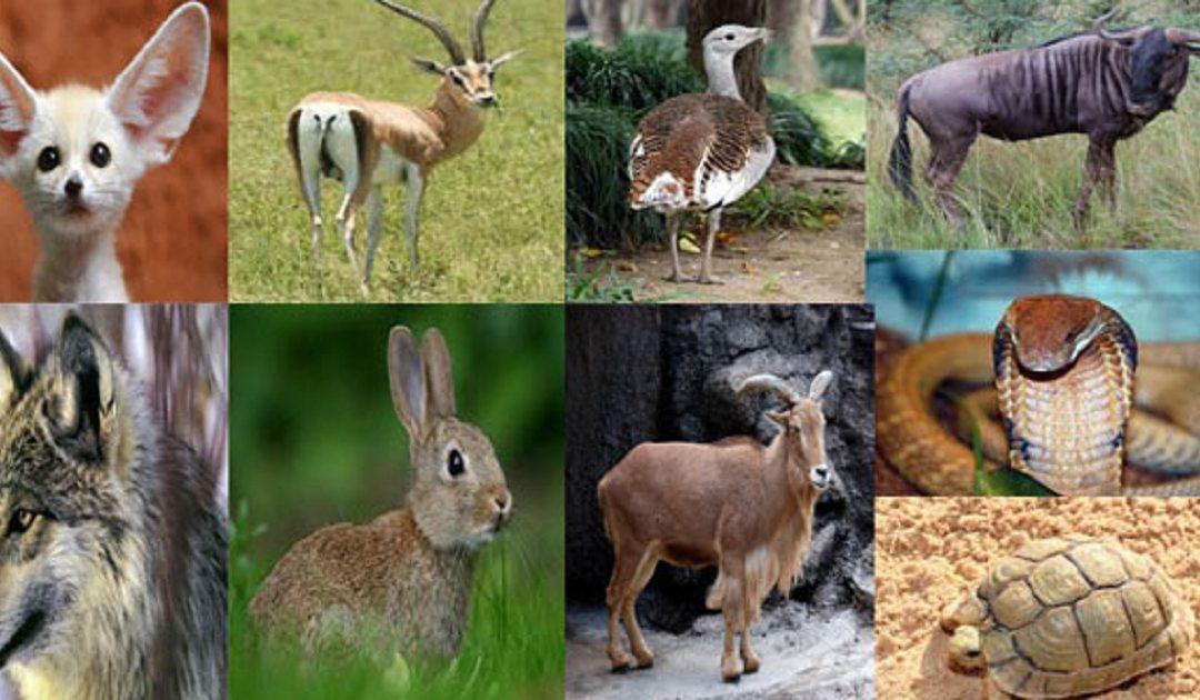 ما يقارب 600 نوع من الحيوانات و 1700 نوع من النباتات مهددة بالانقراض في المغرب
