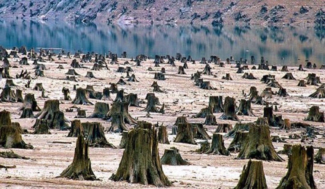 تقرير: دول الاتحاد الأوروبي تستهلك موارد كوكب الأرض أسرع من وتيرة تجددها