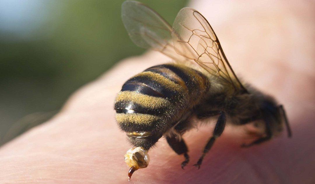 نحلة ترسل حارس أمن خاص إلى المستعجلات بمراكش