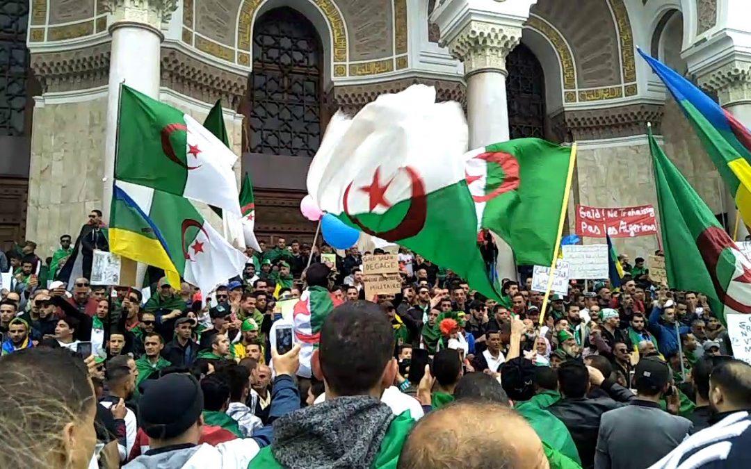 الجزائر.. المجلس الدستوري يتجه لإلغاء الانتخابات