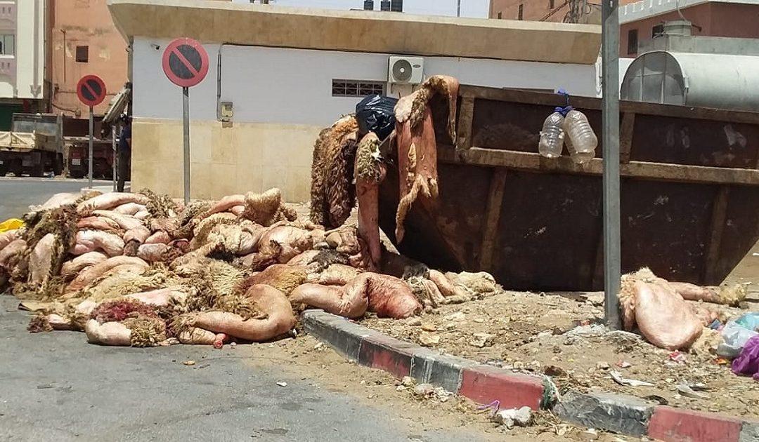 جمع ازيد من 400 طن من النفايات وبقايا عيد الأضحى  بالعيون