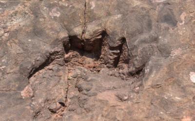 باحثون يكتشفون آثار أقدام ديناصورات تعود لـ100 مليون عام