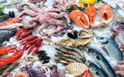 وزارة الفلاحة تمنع صيد الرخويات والصدفيات بسواحل مارتيل واكادير