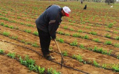 وزارة الفلاحة تساهم في دعم الفلاح للتخفيف من أثر الجفاف