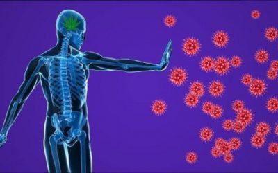 """دراسة علمية: الجهاز المناعي للإنسان قادر على التصدي لفيروس """"كورونا"""" بنفس طريقة """"الإنفلونزا"""" العادية"""