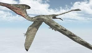 إكتشاف ثلاثة أنواع جديدة من الزواحف المجنحة المفترسة التي عاشت بالمغرب قبل 100 مليون سنة