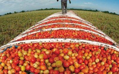 وزارة الفلاحة: أسعار بعض المواد الغذائية التي شهدت زيادات عرضية عادت إلى وضعها الطبيعي