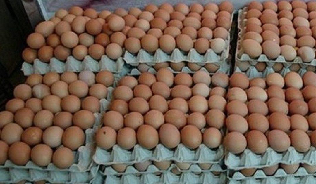 """جائحة """"كورونا"""" تكبد قطاع إنتاج بيض الاستهلاك خسائر تفوق 3 ملايين درهم في اليوم"""