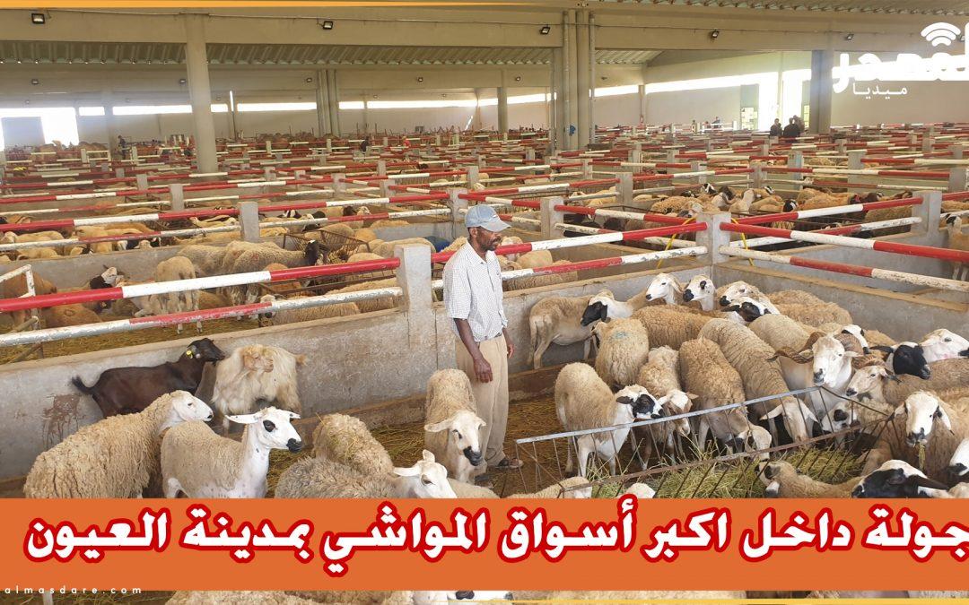 اكتشف الجودة والأسعار داخل اكبر أسواق المواشي بمدينة العيون