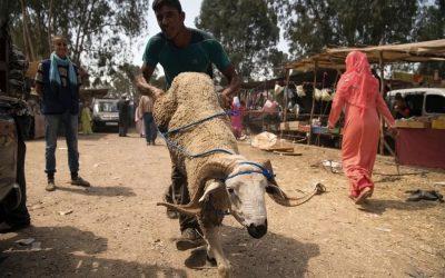 هل انتقل عيد الأضحى عند المغاربة من سنة مؤكدة إلى عادة اجتماعية؟
